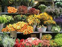 Откраиваем цветочный бизнес
