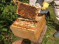 Пчеловодство в деревне