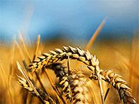 Открываем сельскохозяйственный бизнес