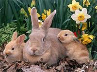 Кролики в домашних условиях