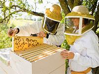 Пчеловодство в сельской местности