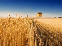Бизнес в сельской местности
