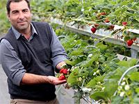 Бизнес план на выращивание клубники 1