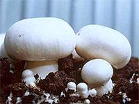 Уход за грибами