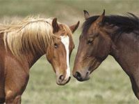 Разведение лошадей: серьезный бизнес с большими перспективами