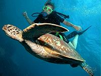 Подводное плаванье